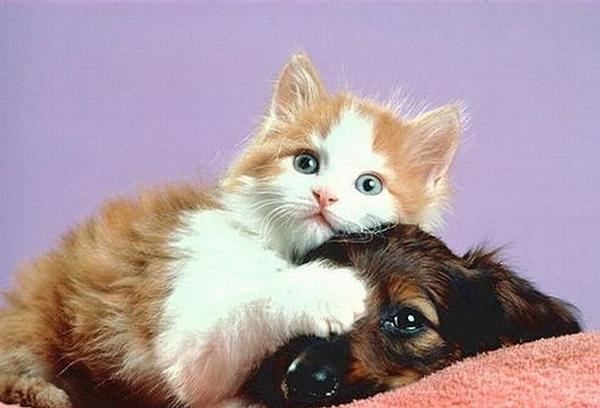 Obrázky so zvieratkami